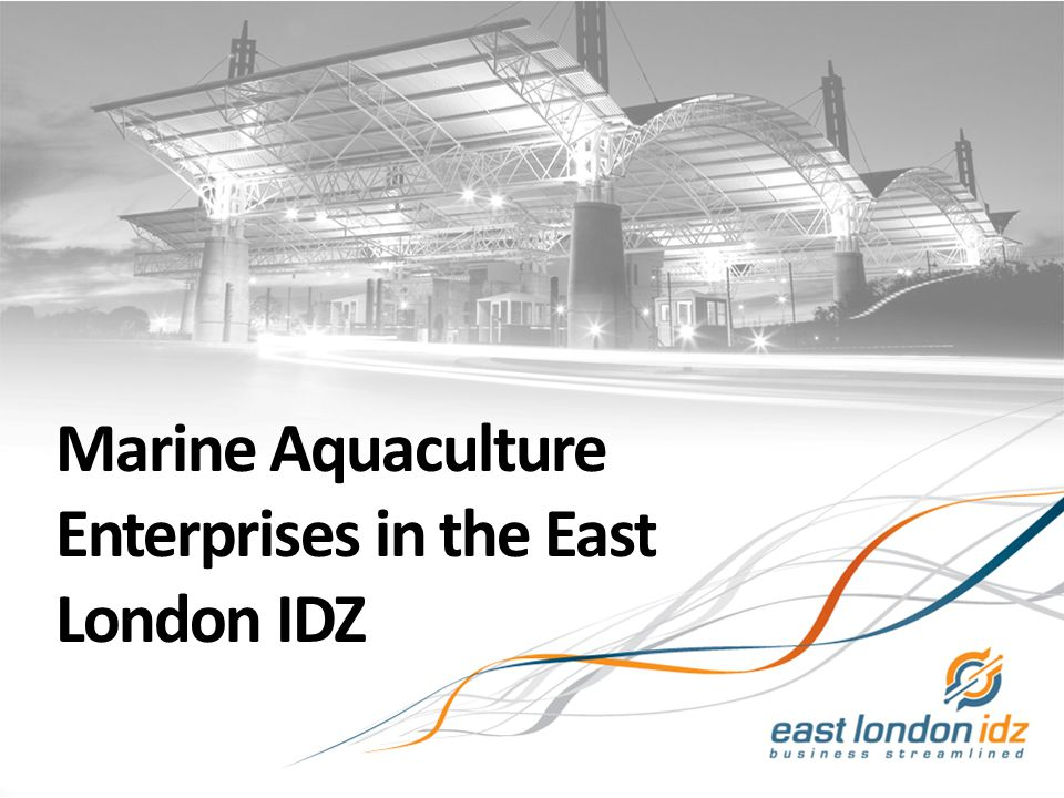 Marine Aquaculture Enterprises in the East London IDZ