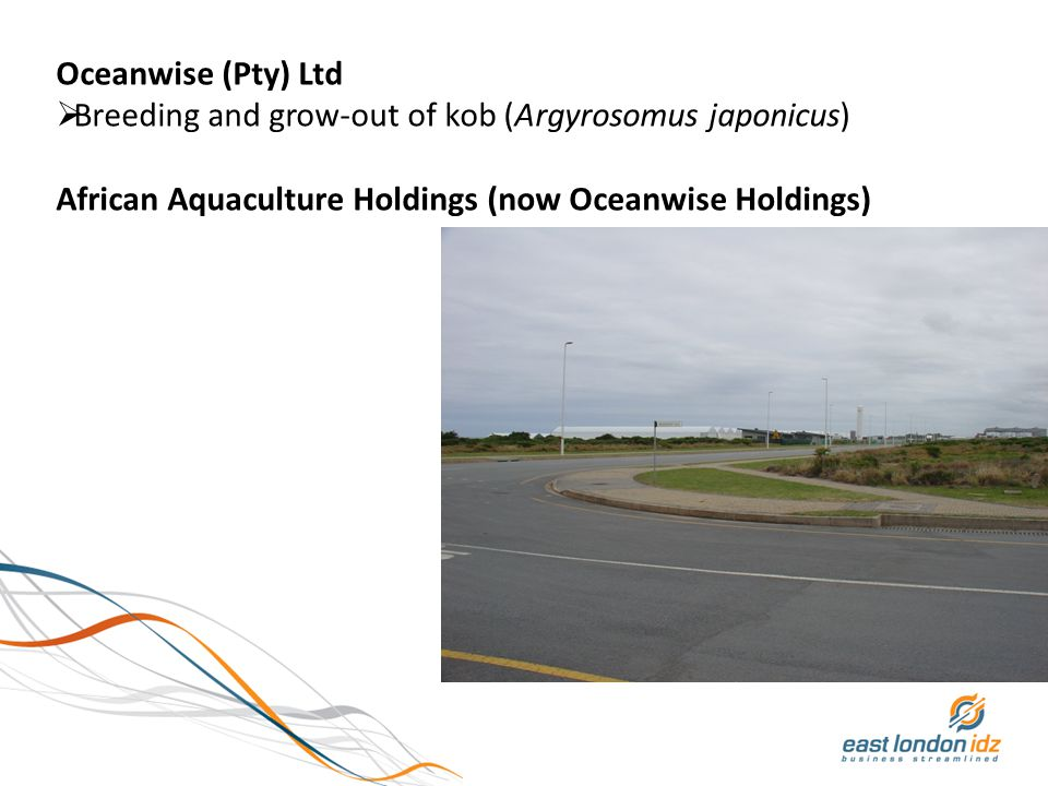 Oceanwise (Pty) Ltd  Breeding and grow-out of kob (Argyrosomus japonicus) African Aquaculture Holdings (now Oceanwise Holdings)
