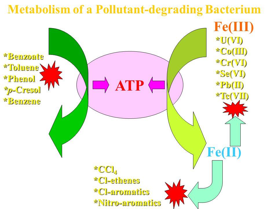 ATP ACETATE CO 2 Fe(III) Fe(II) Metabolism of a Pollutant-degrading Bacterium*Benzoate*Toluene*Phenol *p-Cresol *Benzene *U(VI)*Co(III)*Cr(VI)*Se(VI)*Pb(II)*Tc(VII) *CCl 4 *Cl-ethenes*Cl-aromatics*Nitro-aromatics