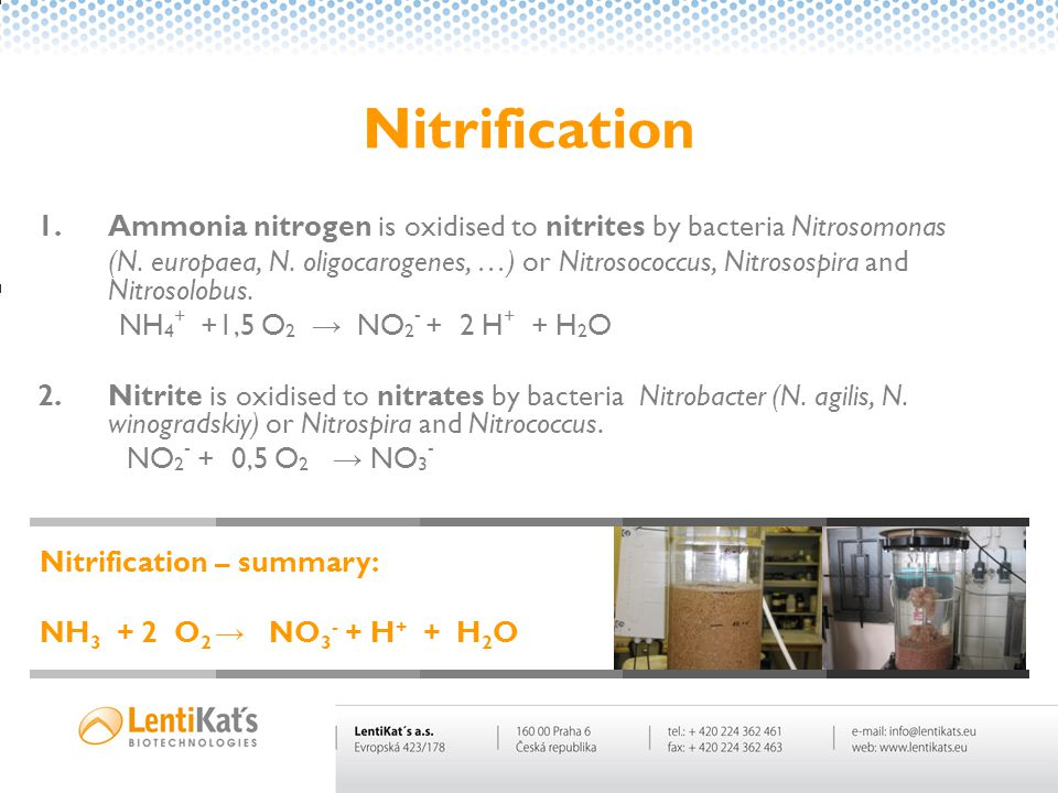 Nitrification 1.Ammonia nitrogen is oxidised to nitrites by bacteria Nitrosomonas (N.