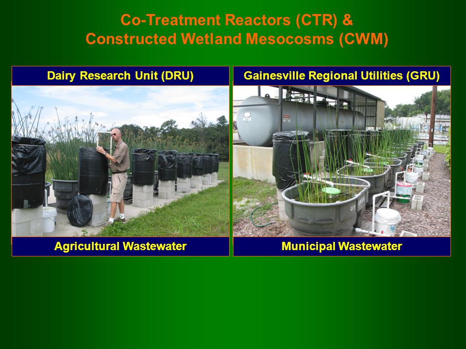 Co-Treatment Reactors (CTR) & Constructed Wetland Mesocosms (CWM) Dairy Research Unit (DRU) Agricultural Wastewater Gainesville Regional Utilities (GR