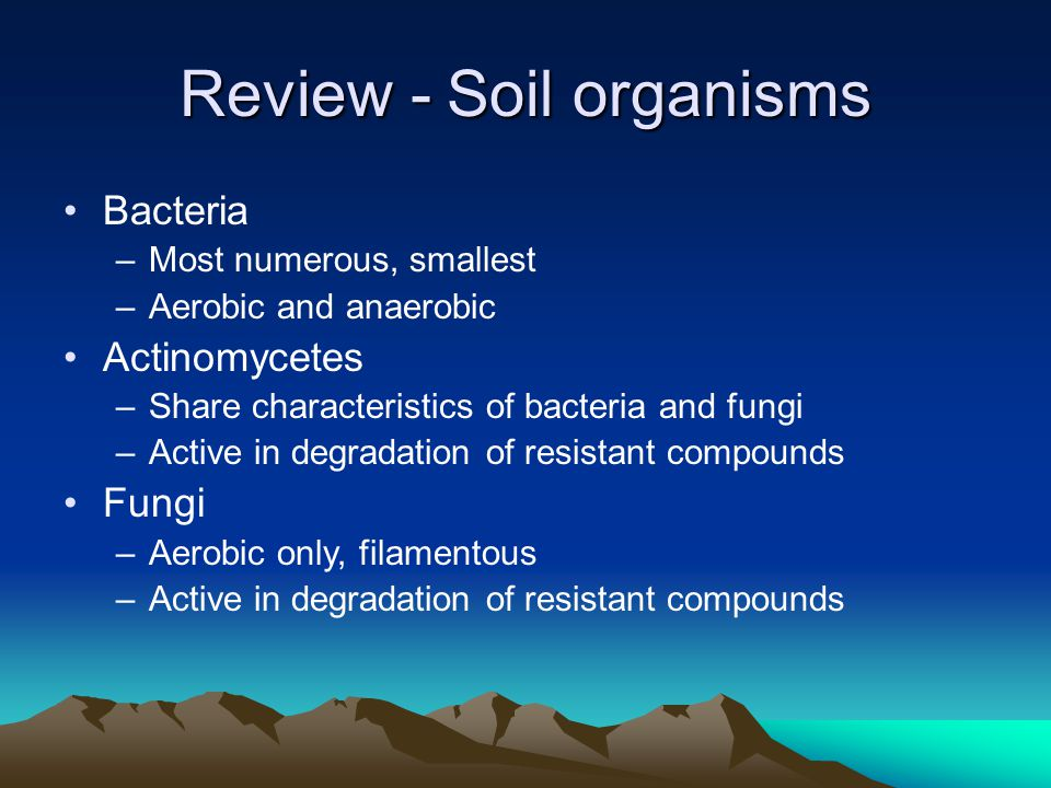Review - Soil organisms Bacteria –Most numerous, smallest –Aerobic and anaerobic Actinomycetes –Share characteristics of bacteria and fungi –Active in degradation of resistant compounds Fungi –Aerobic only, filamentous –Active in degradation of resistant compounds
