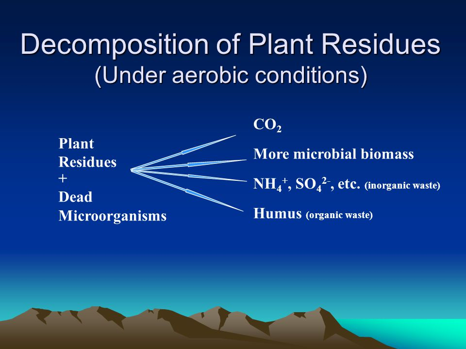 Decomposition of Plant Residues (Under aerobic conditions) Plant Residues CO 2 NH 4 +, SO 4 2-, etc.