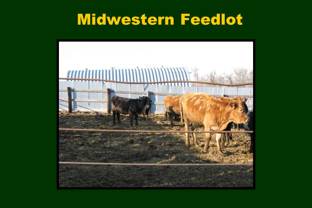 Midwestern Feedlot
