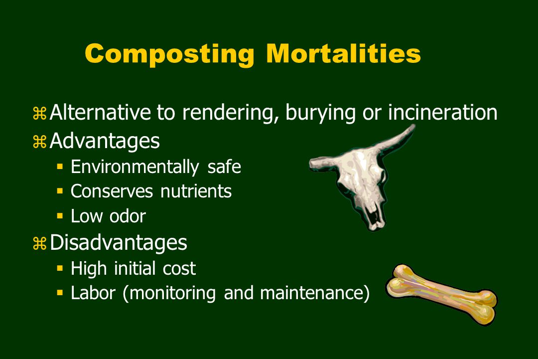 Composting Mortalities z Alternative to rendering, burying or incineration z Advantages  Environmentally safe  Conserves nutrients  Low odor z Disadvantages  High initial cost  Labor (monitoring and maintenance)