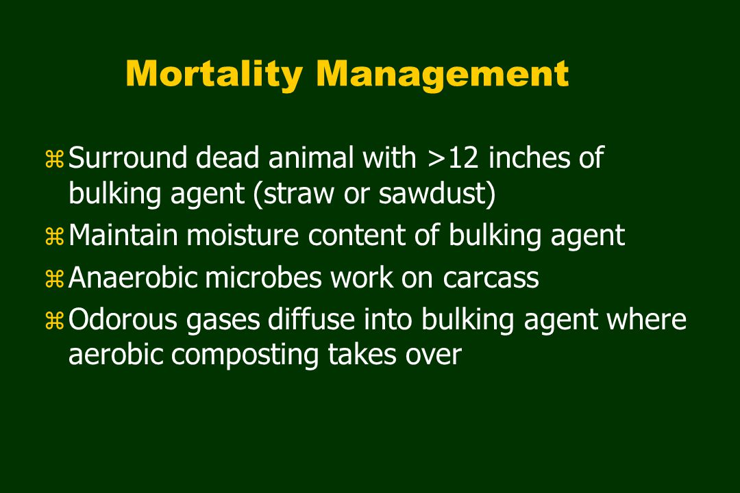 Mortality Management z Surround dead animal with >12 inches of bulking agent (straw or sawdust) z Maintain moisture content of bulking agent z Anaerobic microbes work on carcass z Odorous gases diffuse into bulking agent where aerobic composting takes over