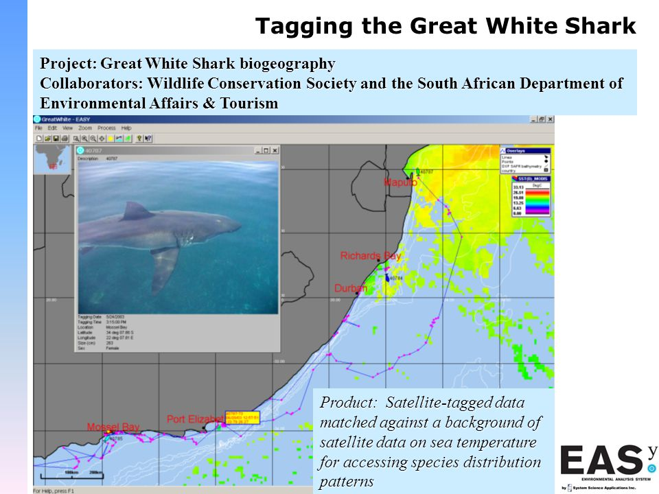 Tagging the Great White Shark Project: Great White Shark biogeography Collaborators: Wildlife Conservation Society and the South African Department of Environmental Affairs & Tourism Product: Satellite-tagged data matched against a background of satellite data on sea temperature for accessing species distribution patterns