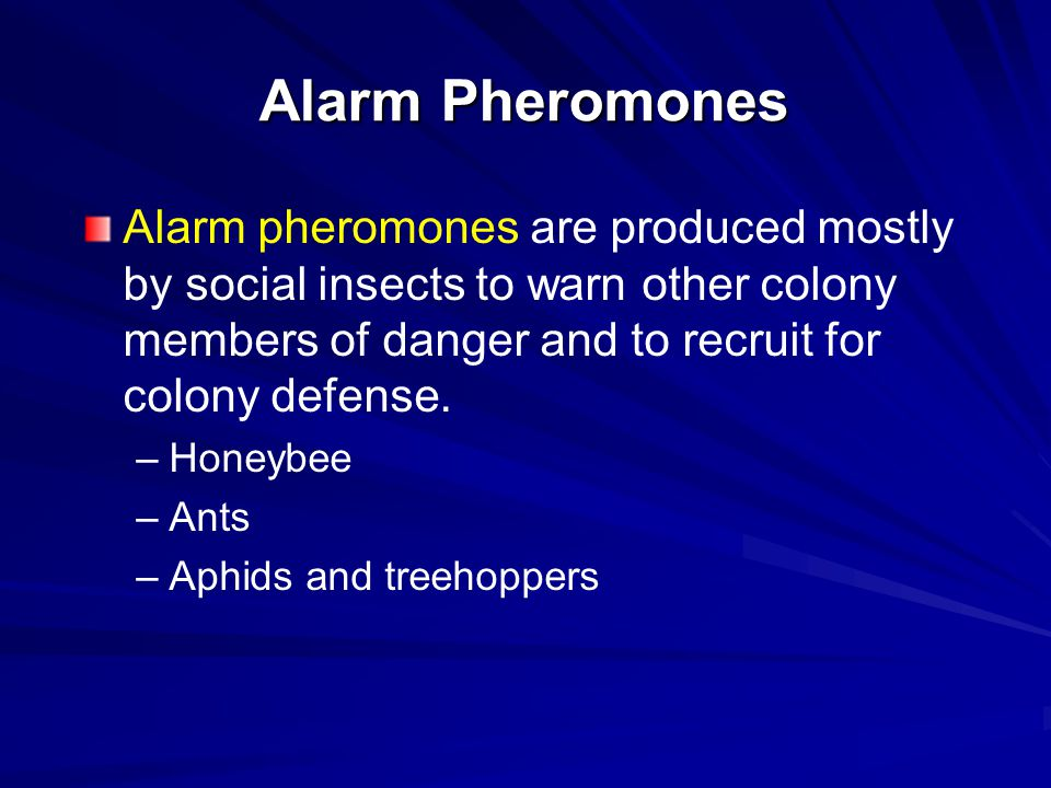 Alarm Pheromones Alarm pheromones are produced mostly by social insects to warn other colony members of danger and to recruit for colony defense. – –H