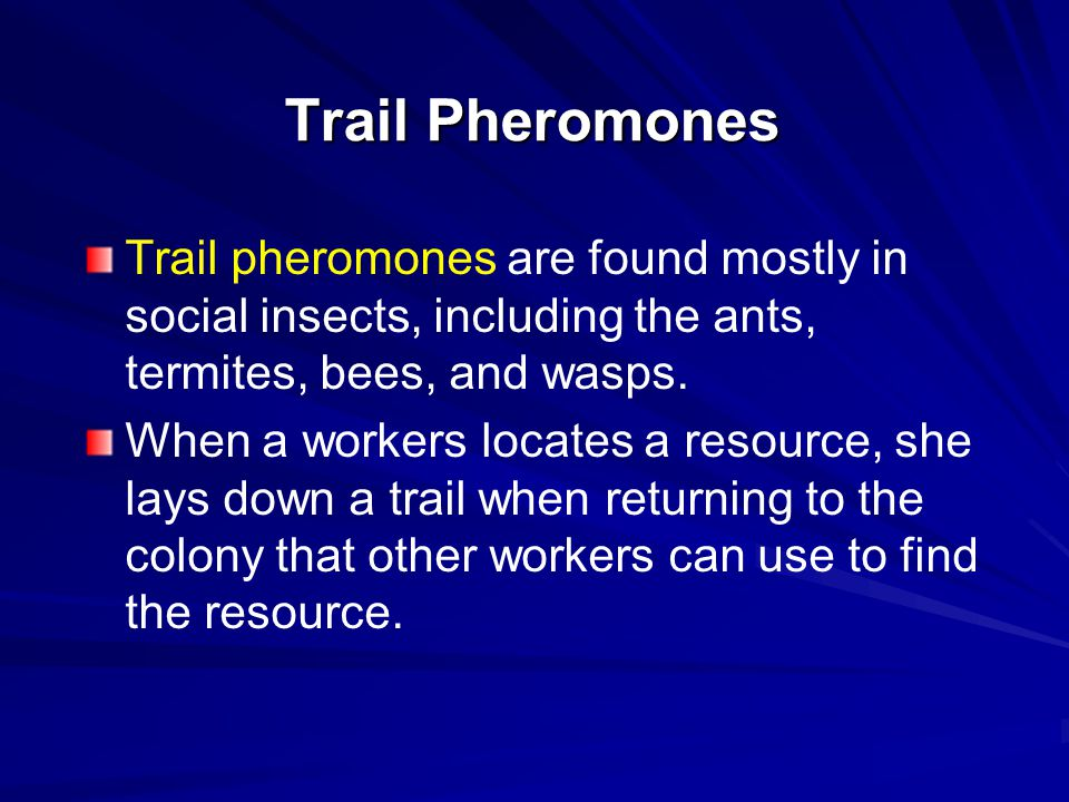 Trail Pheromones Trail pheromones are found mostly in social insects, including the ants, termites, bees, and wasps. When a workers locates a resource