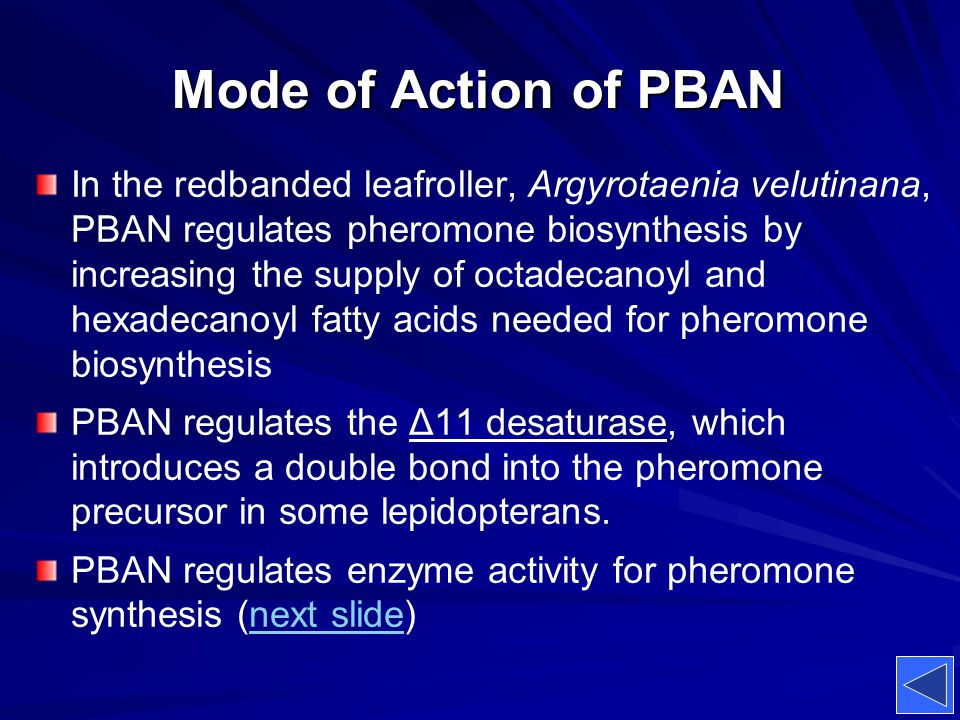 Mode of Action of PBAN In the redbanded leafroller, Argyrotaenia velutinana, PBAN regulates pheromone biosynthesis by increasing the supply of octadec