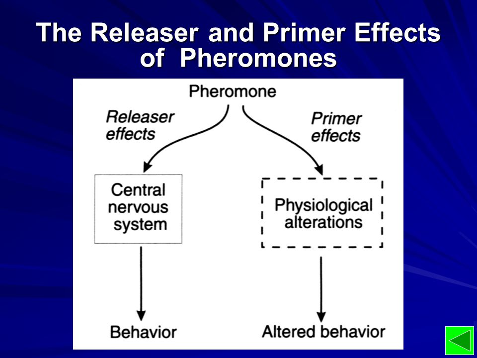 The Releaser and Primer Effects of Pheromones