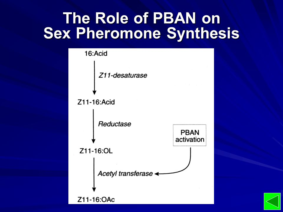 The Role of PBAN on Sex Pheromone Synthesis