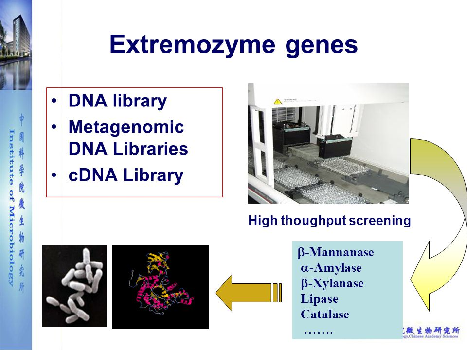 Extremozyme genes DNA library Metagenomic DNA Libraries cDNA Library  -Mannanase  -Amylase  -Xylanase Lipase Catalase …….