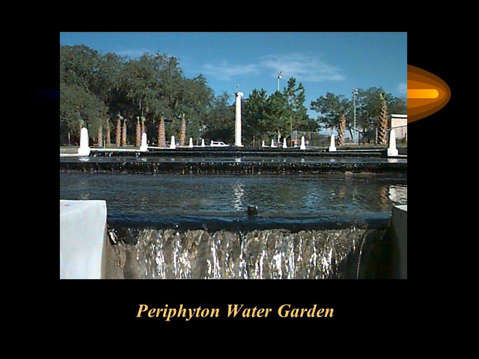 Periphyton Water Garden