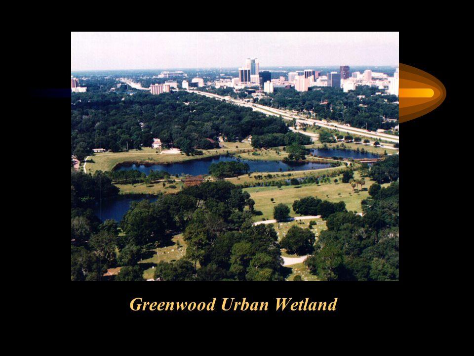 Greenwood Urban Wetland