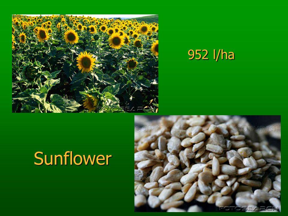 952 l/ha Sunflower 952 l/ha Sunflower