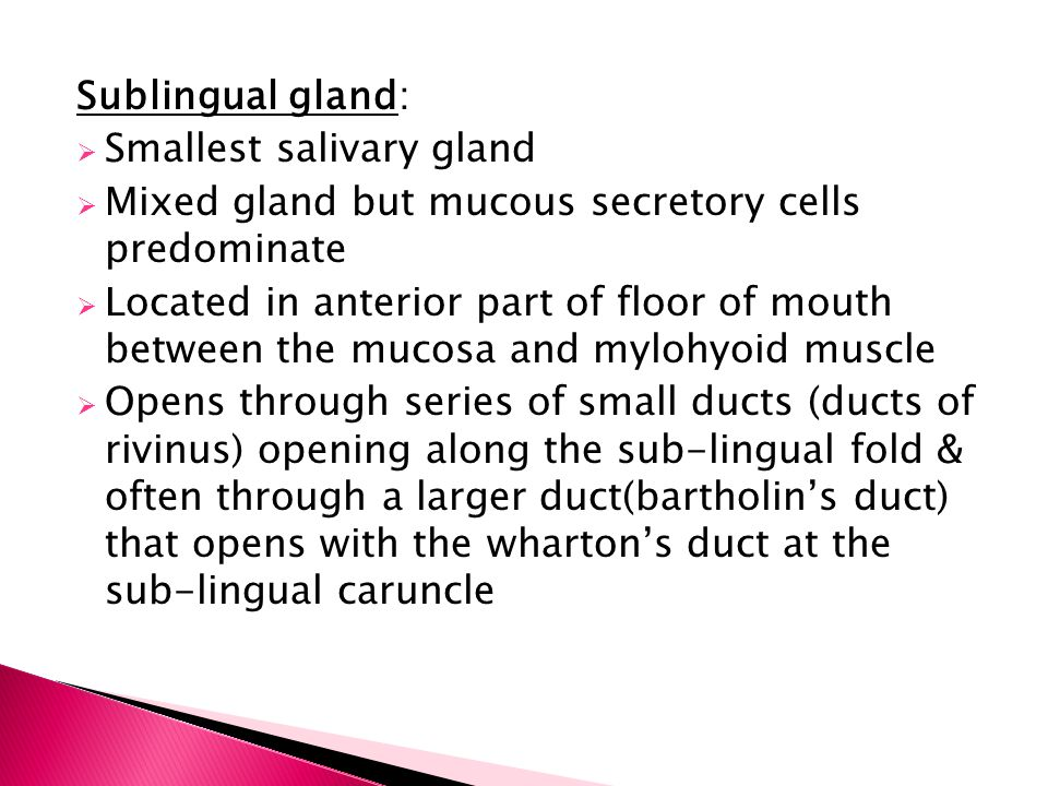 Sublingual gland:  Smallest salivary gland  Mixed gland but mucous secretory cells predominate  Located in anterior part of floor of mouth between