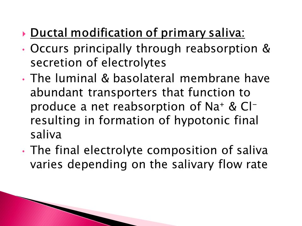  Ductal modification of primary saliva: Occurs principally through reabsorption & secretion of electrolytes The luminal & basolateral membrane have a