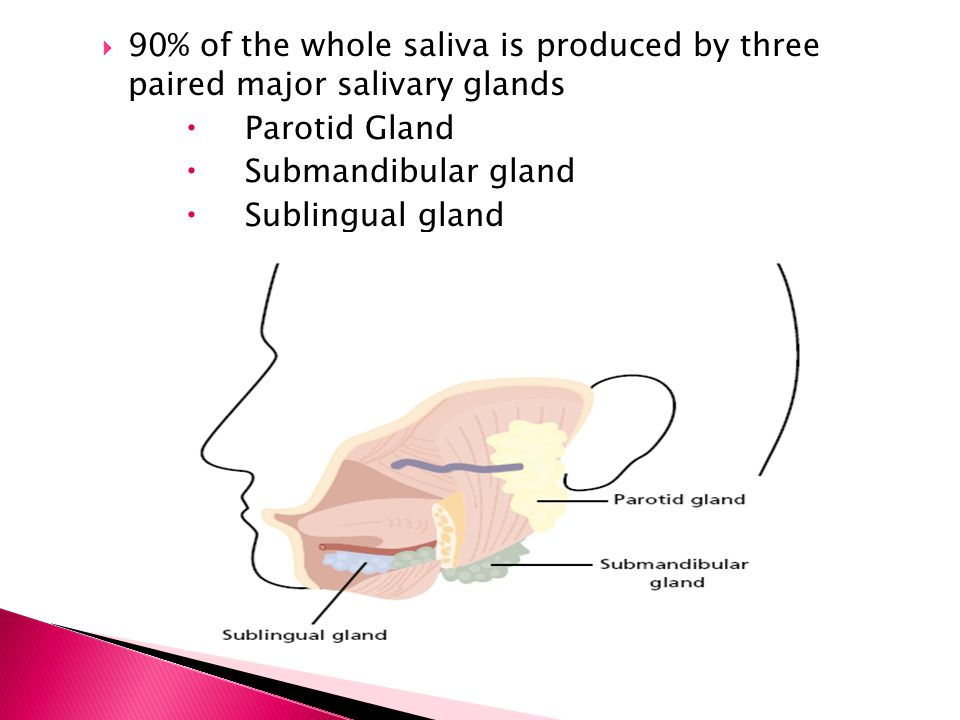  90% of the whole saliva is produced by three paired major salivary glands  Parotid Gland  Submandibular gland  Sublingual gland