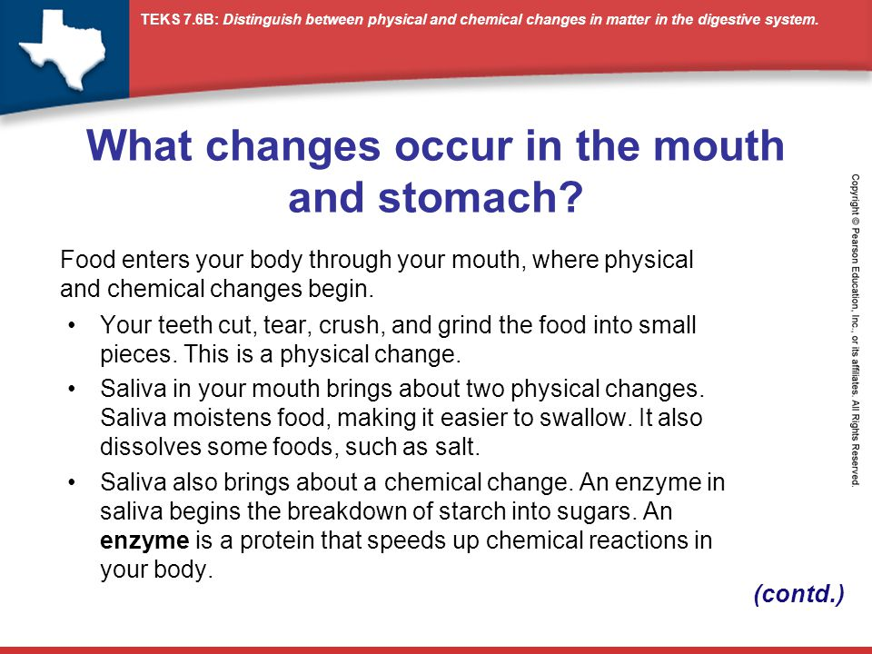 TEKS 7.6B: Distinguish between physical and chemical changes in matter in the digestive system.