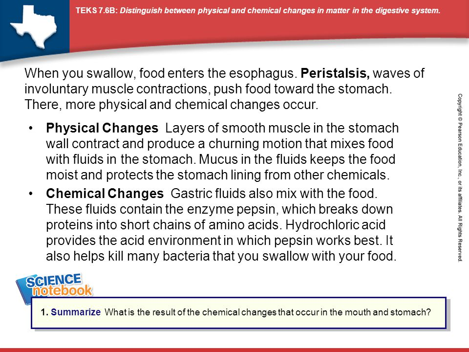 TEKS 7.6B: Distinguish between physical and chemical changes in matter in the digestive system. Physical Changes Layers of smooth muscle in the stomac