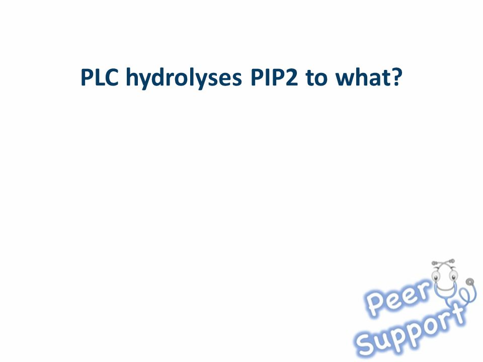 PLC hydrolyses PIP2 to what