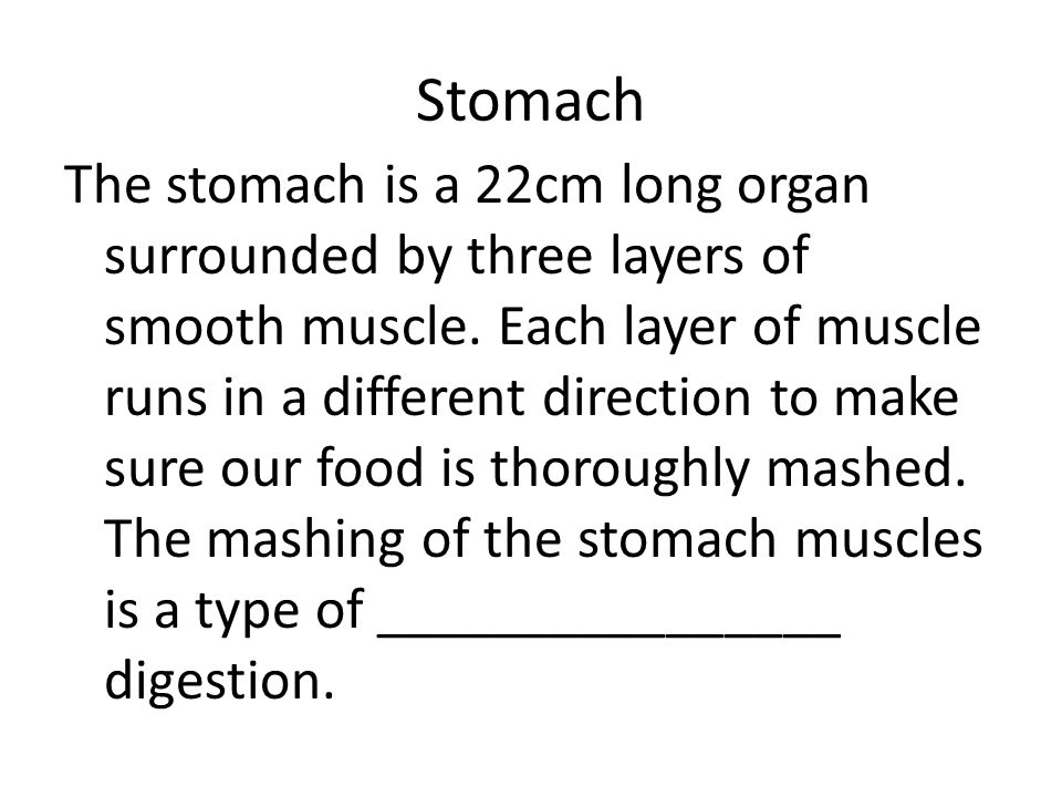 Stomach The stomach is a 22cm long organ surrounded by three layers of smooth muscle. Each layer of muscle runs in a different direction to make sure