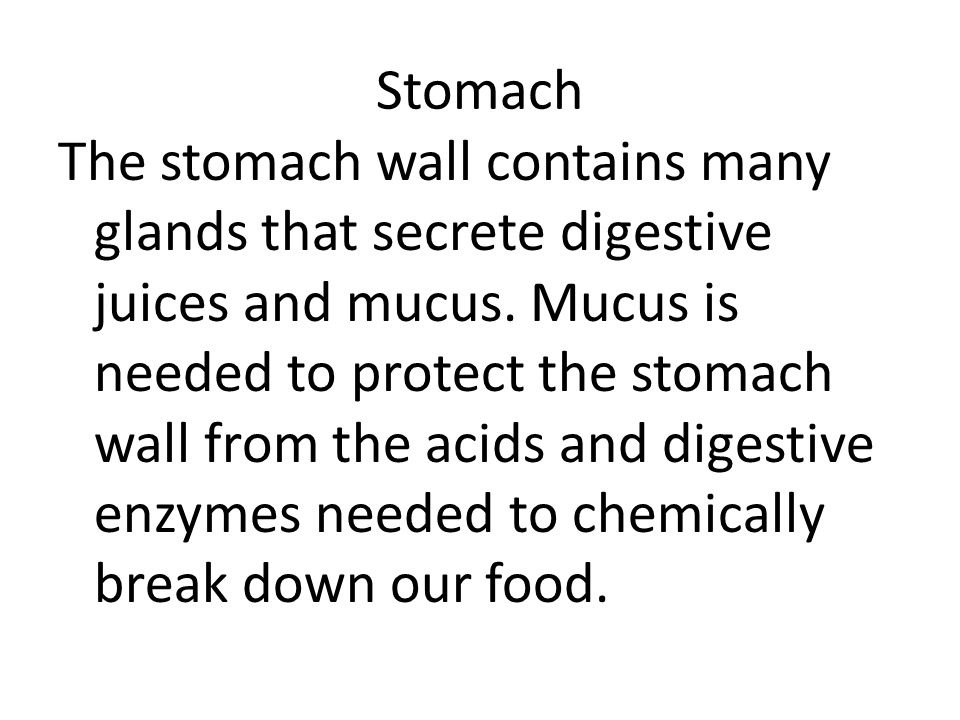 Stomach The stomach wall contains many glands that secrete digestive juices and mucus. Mucus is needed to protect the stomach wall from the acids and