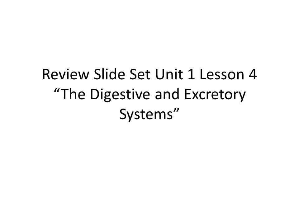 """Review Slide Set Unit 1 Lesson 4 """"The Digestive and Excretory Systems"""""""