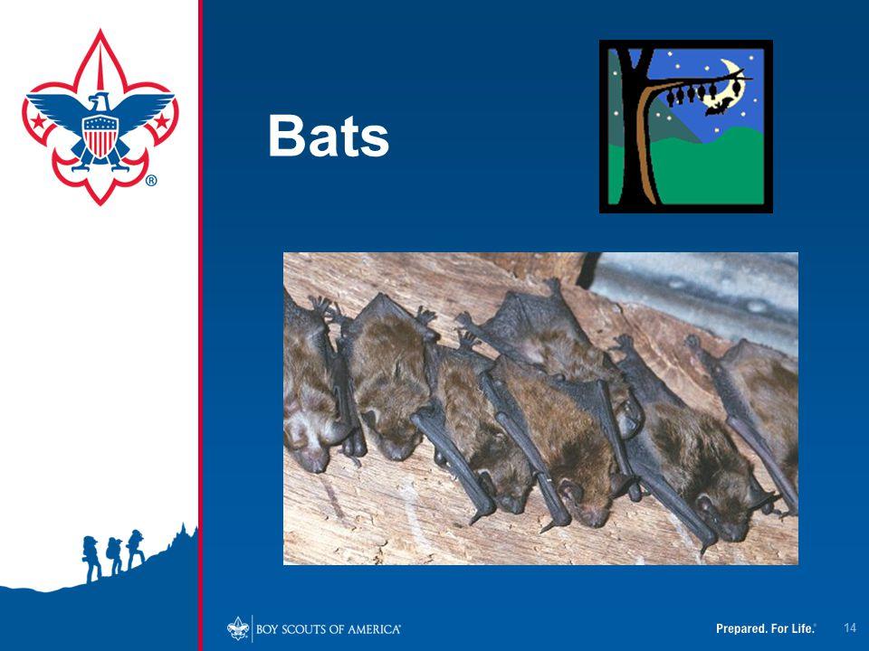 Bats 14
