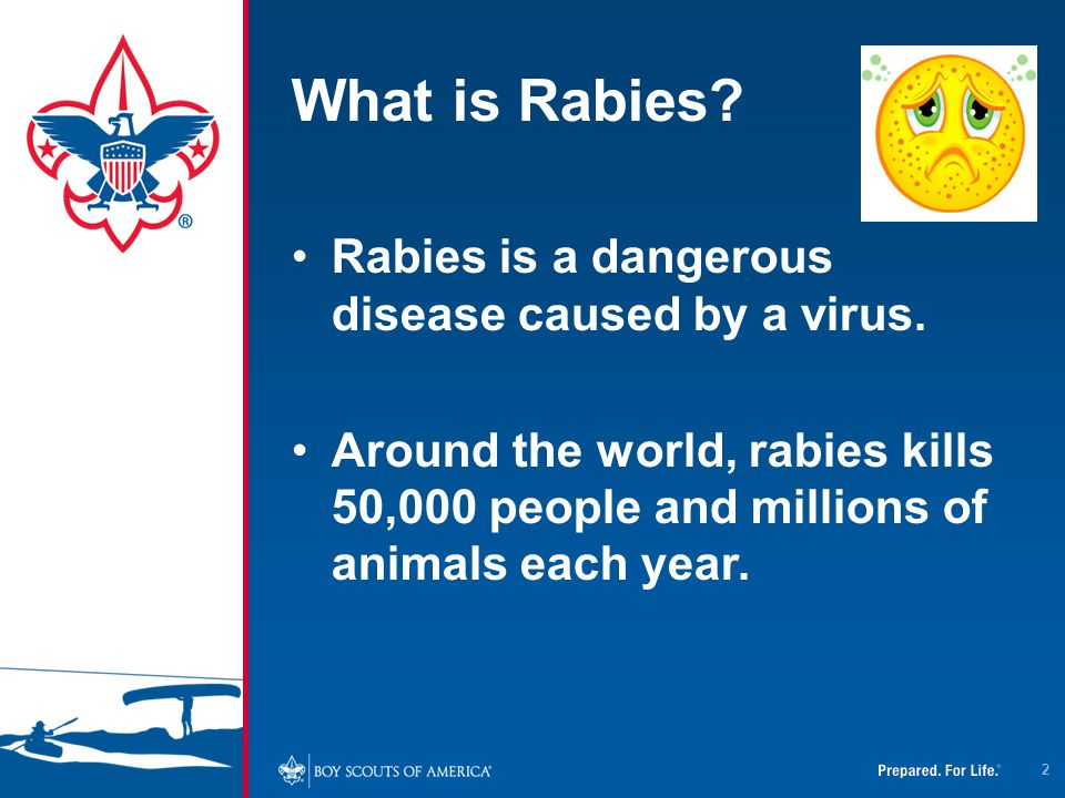 True or False? People can get rabies from the saliva of an animal with rabies. 53