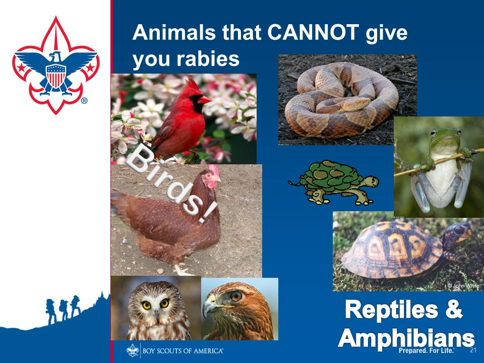 Animals that CANNOT give you rabies 21