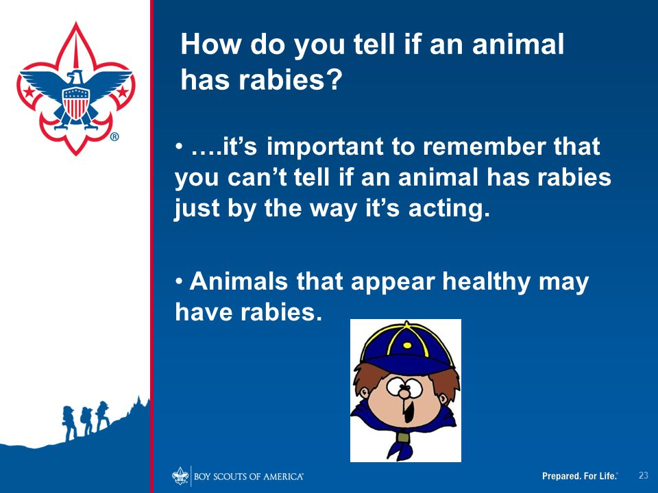 How do you tell if an animal has rabies? ….it's important to remember that you can't tell if an animal has rabies just by the way it's acting. Animals