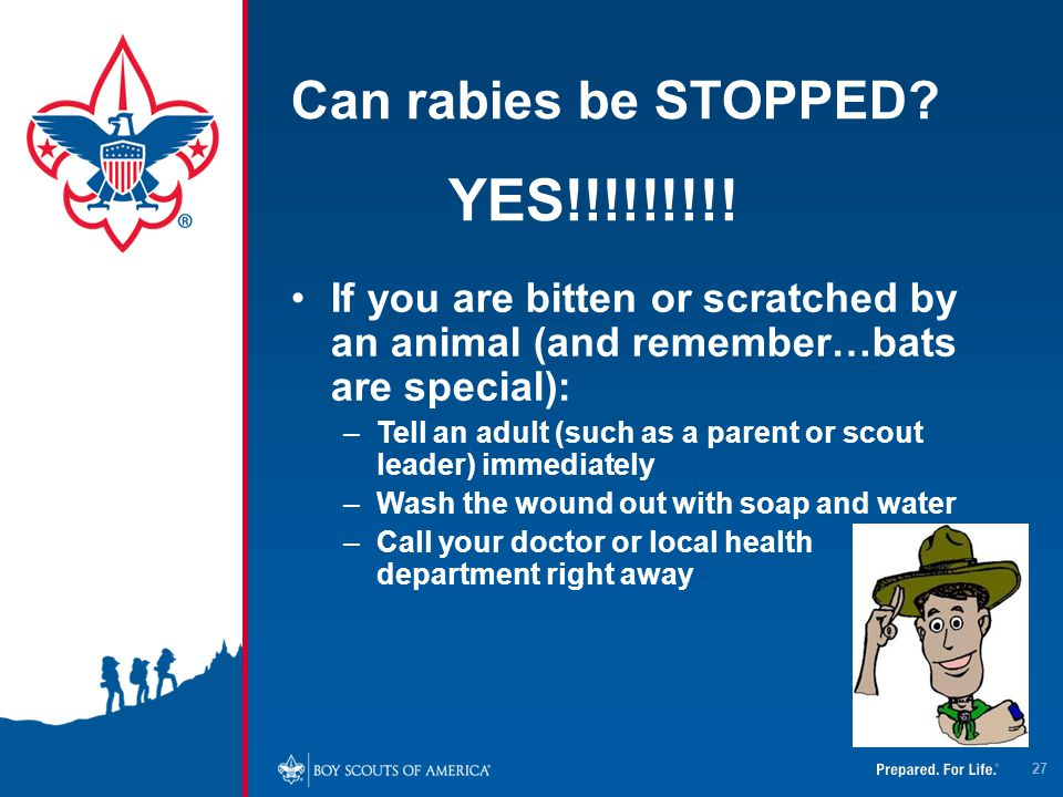 Can rabies be STOPPED? YES!!!!!!!!! If you are bitten or scratched by an animal (and remember…bats are special): –Tell an adult (such as a parent or s