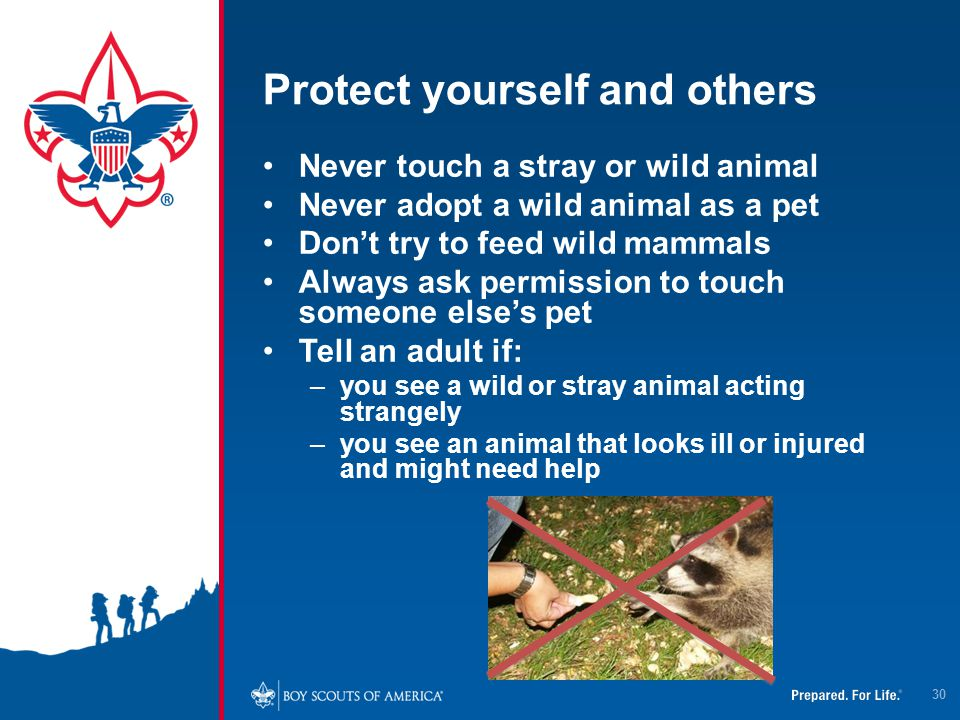 Protect yourself and others Never touch a stray or wild animal Never adopt a wild animal as a pet Don't try to feed wild mammals Always ask permission
