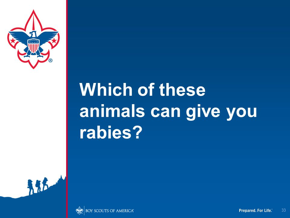 Which of these animals can give you rabies? 33