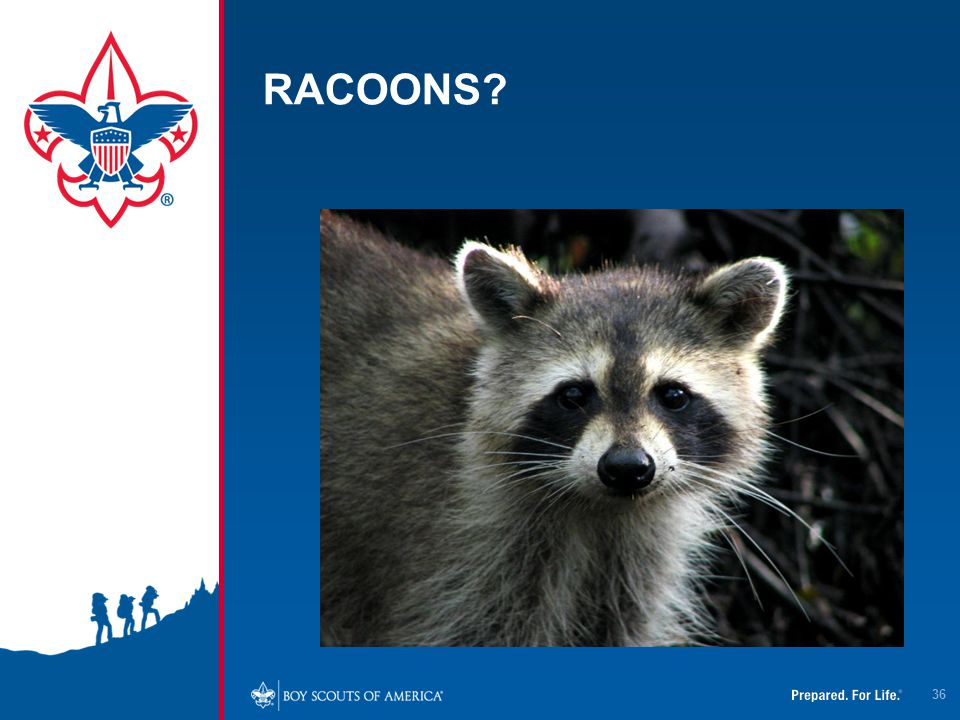 RACOONS? 36