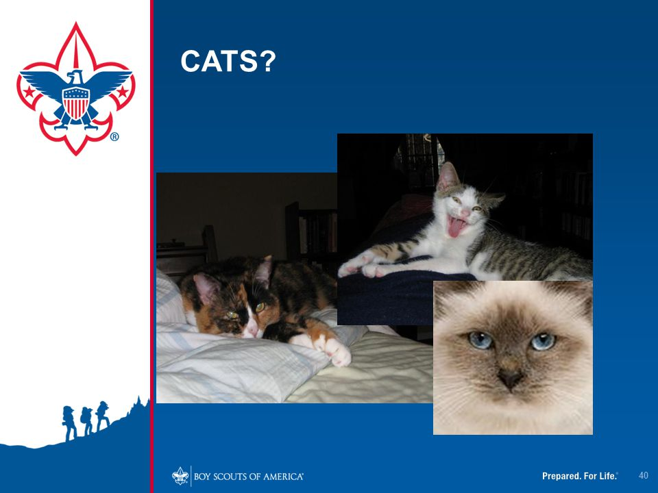CATS? 40