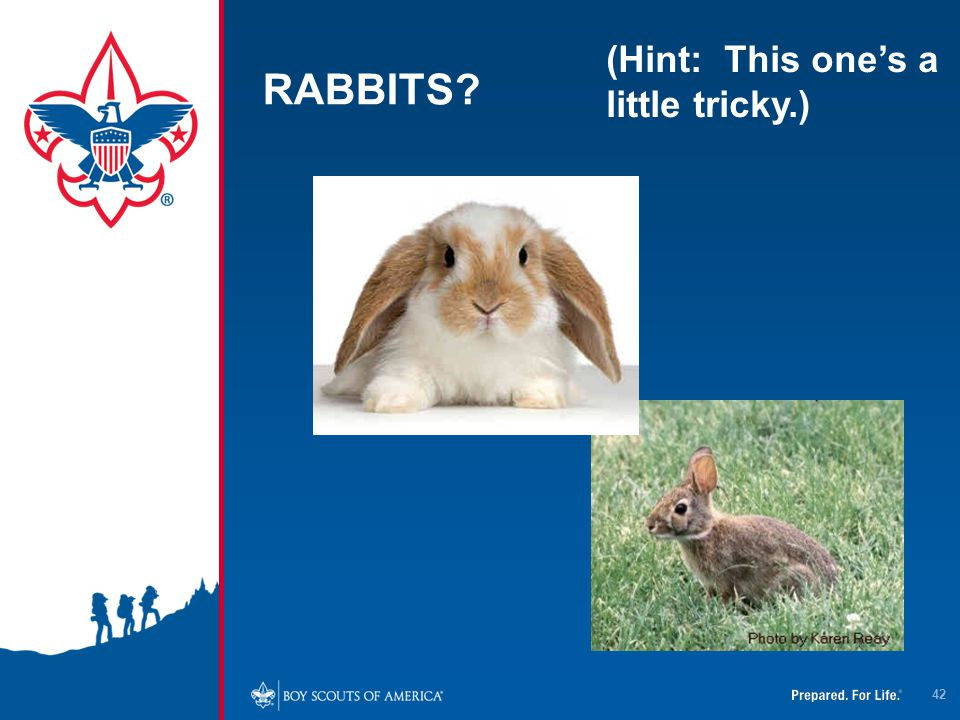 RABBITS? (Hint: This one's a little tricky.) 42