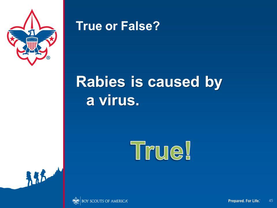 True or False? Rabies is caused by a virus. 45