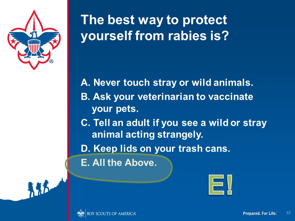 The best way to protect yourself from rabies is? A. Never touch stray or wild animals. B. Ask your veterinarian to vaccinate your pets. C. Tell an adu