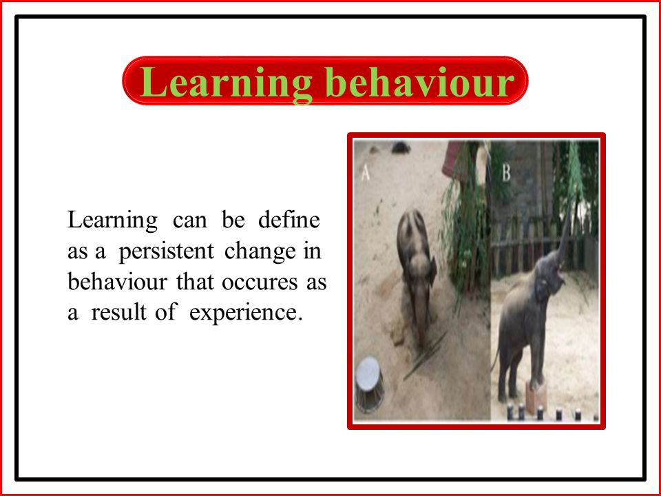 Learning behaviour Learning can be define as a persistent change in behaviour that occures as a result of experience.