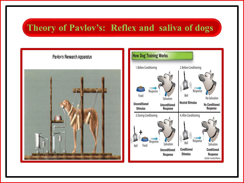 Theory of Pavlov's: Reflex and saliva of dogs