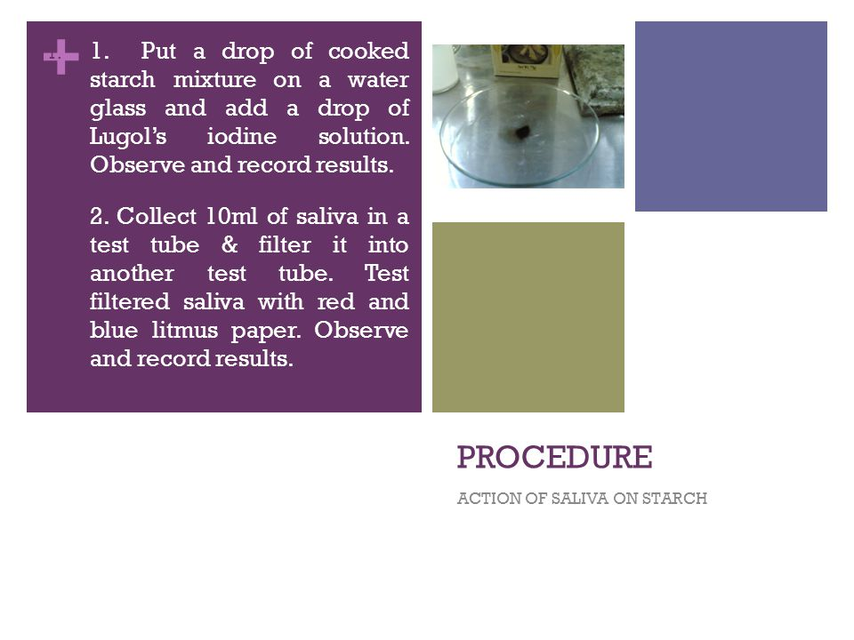 + PROCEDURE ACTION OF SALIVA ON STARCH 1. 1.