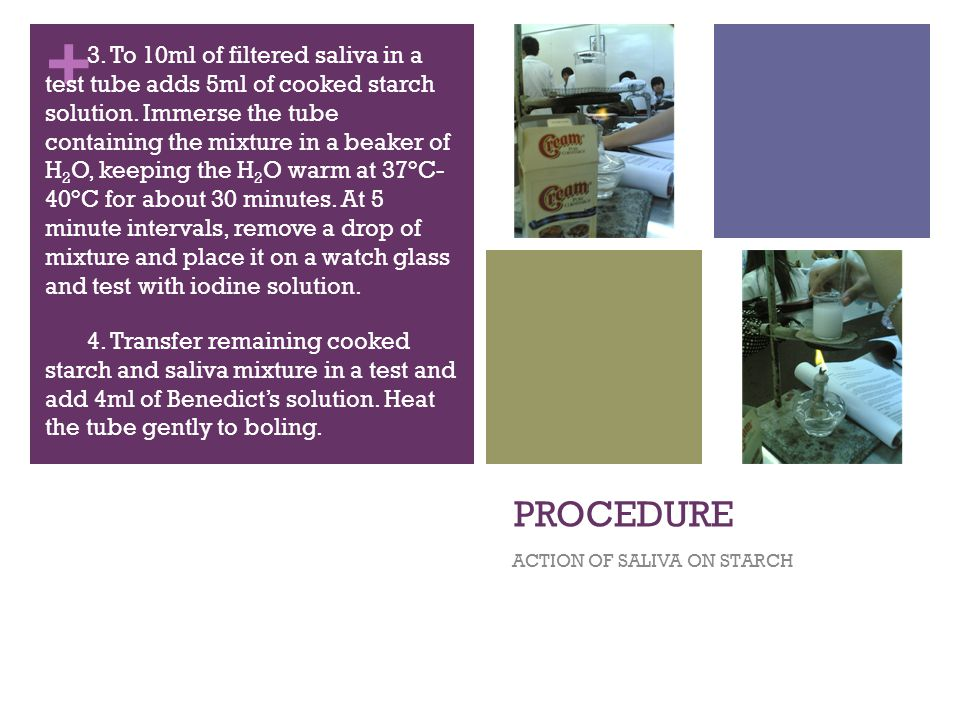 + PROCEDURE ACTION OF SALIVA ON STARCH 3.