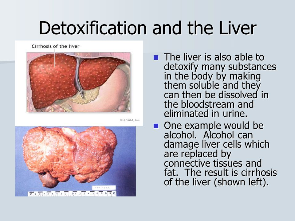 Liver and Gall Bladder The presence of lipids in the small intestine trigger the release of the hormone cholecystokinin (CCK) which triggers the release of bile from the gall bladder.