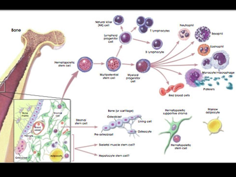 Human Blood pH: 7.35 – 7.45 Constituents: RBC – 45% WBC – 0.7% Platelets Plasma – 54.3% 92% Water 8% Blood plasma proteins Purification: centrifugation