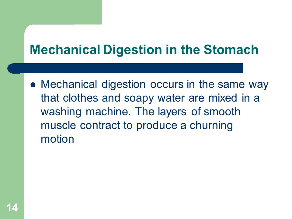14 Mechanical Digestion in the Stomach Mechanical digestion occurs in the same way that clothes and soapy water are mixed in a washing machine. The la