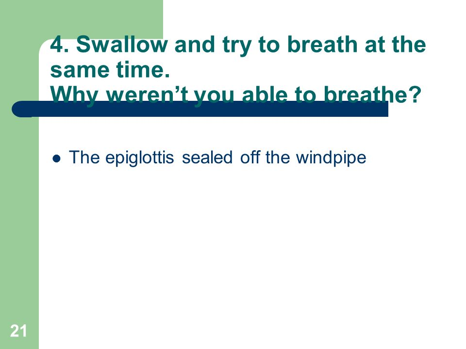 21 4. Swallow and try to breath at the same time. Why weren't you able to breathe? The epiglottis sealed off the windpipe