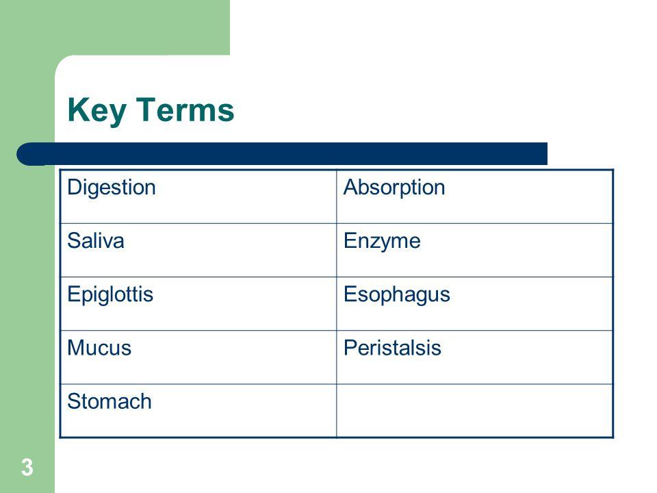 3 Key Terms DigestionAbsorption SalivaEnzyme EpiglottisEsophagus MucusPeristalsis Stomach